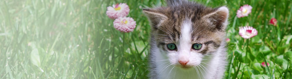 General-Image---Kitten-in-Field