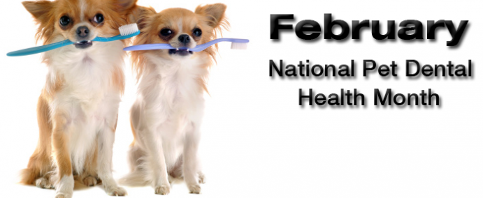 February - National Pet Dental Health Month - Graphic_0